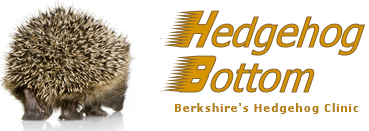 Berkshire's Hedgehog Hospital